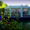Swan Lake Video